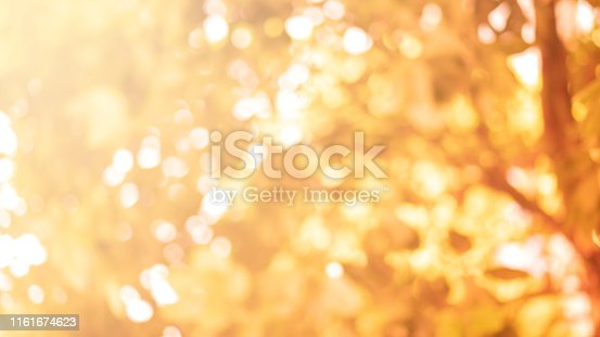 abstract blurred leaves of tree in orange color nature forest with sunny and bokeh light  at  public park  horizontal background for autumn season concept