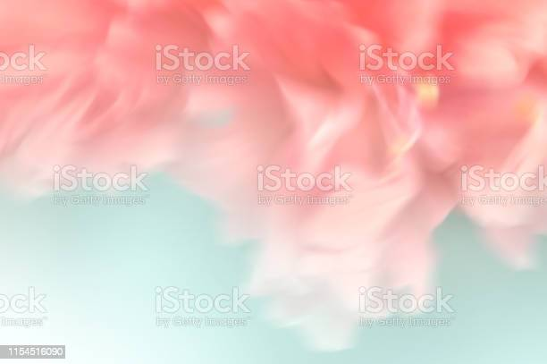 Abstract blurred sweet coralpink flower blossom picture id1154516090?b=1&k=6&m=1154516090&s=612x612&h=gzqzh0pzvzpcxzuxwfm gmuhluiplzgoqu1kfw0s1eg=