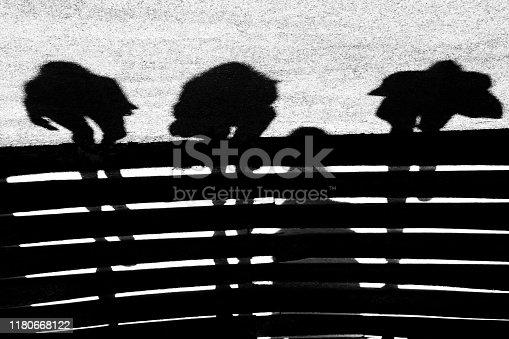 istock Abstract blurry rhythm shadows 1180668122