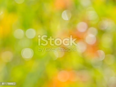 istock Abstract bokeh and blurry nature background 811789922