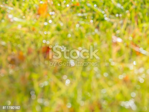 istock Abstract bokeh and blurry nature background 811790162