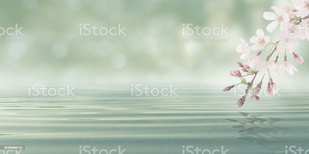 Abstract Bokeh Background Water with leaves and flowers from blossom plant stock photo