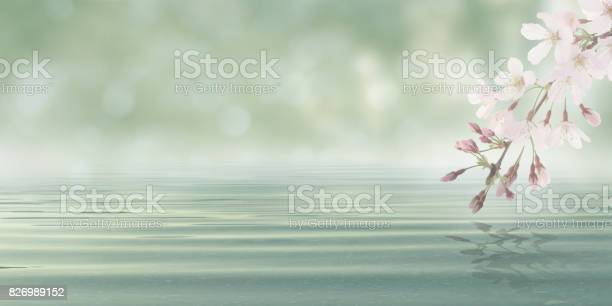 Photo of Abstract Bokeh Background Water with leaves and flowers from blossom plant