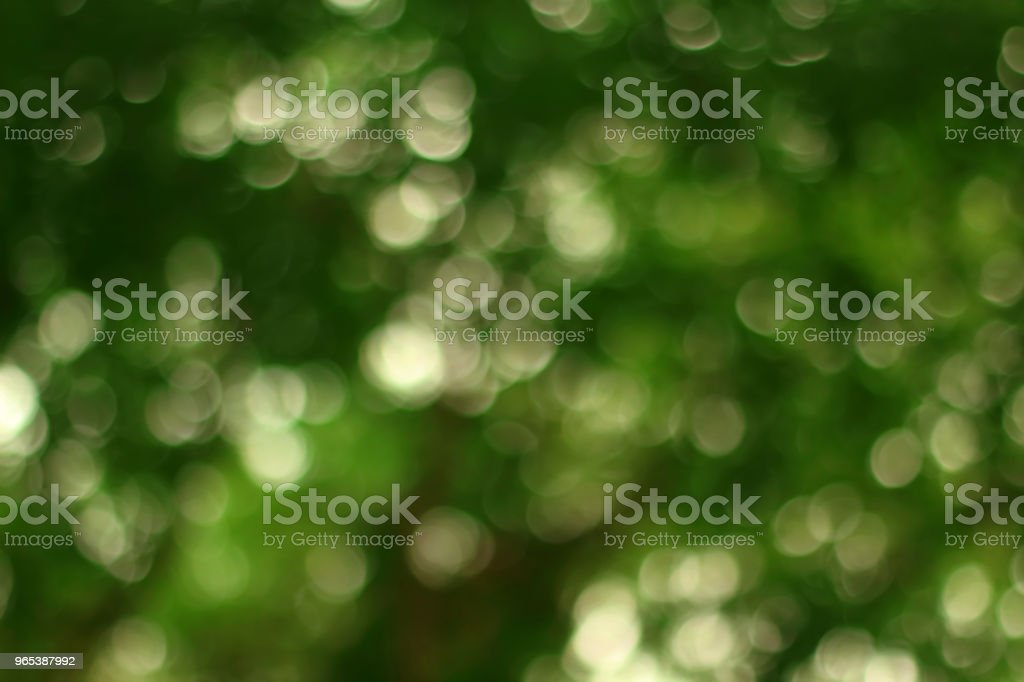 Abstract bokeh of green tree color for summer background. zbiór zdjęć royalty-free