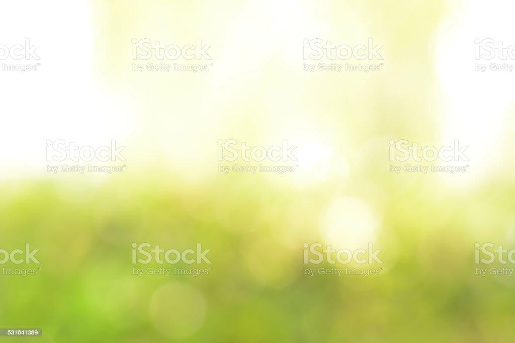 Abstract bokeh white & green background stock photo