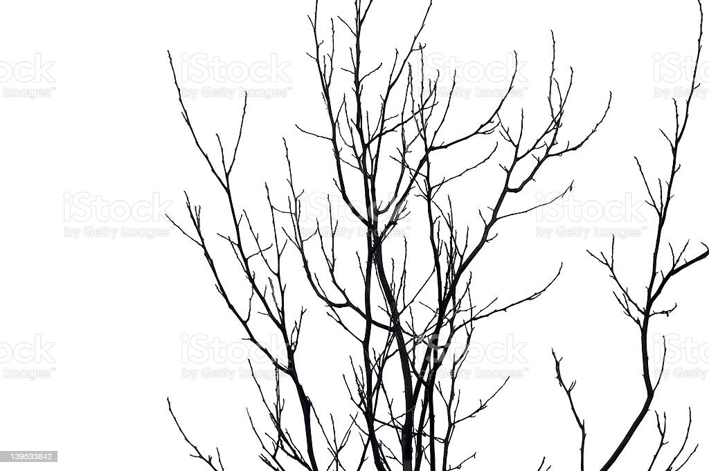 Abstract Branches royalty-free stock photo