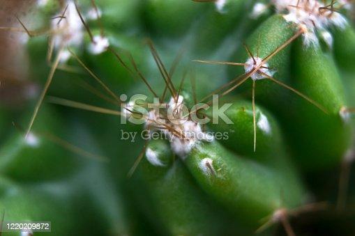903520476 istock photo abstract cactus 1220209872