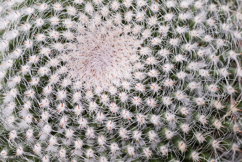 Abstract cactus stock photo