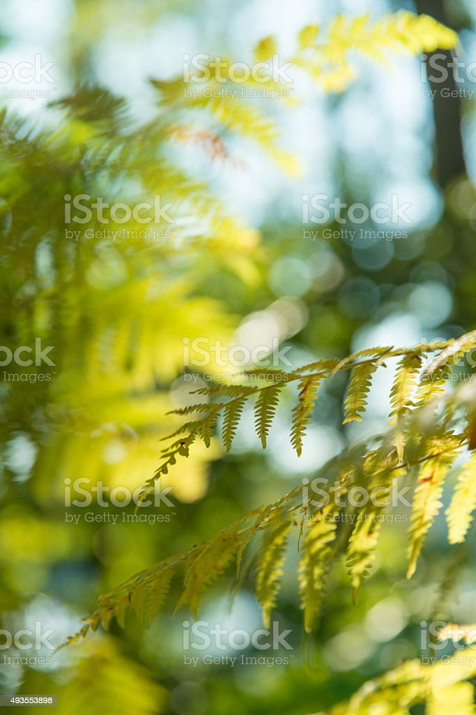 abstract close up fern in fall - shallow DOF stock photo