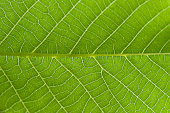 Abstract closeup green leaf texture background