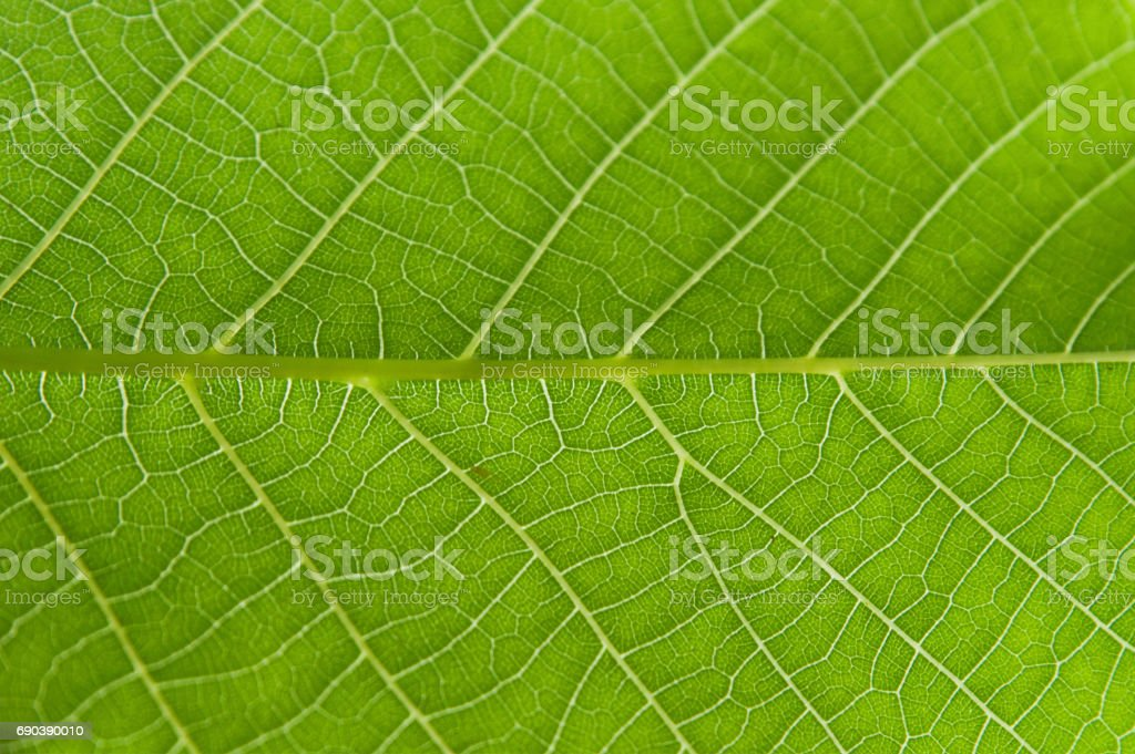 Abstract closeup green leaf texture background - foto de stock