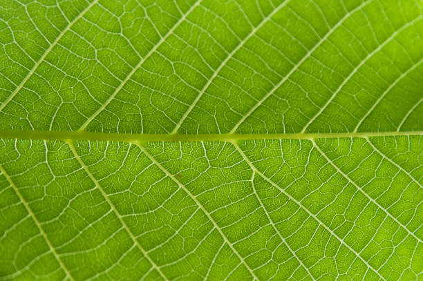 Abstract closeup green leaf texture background – Foto