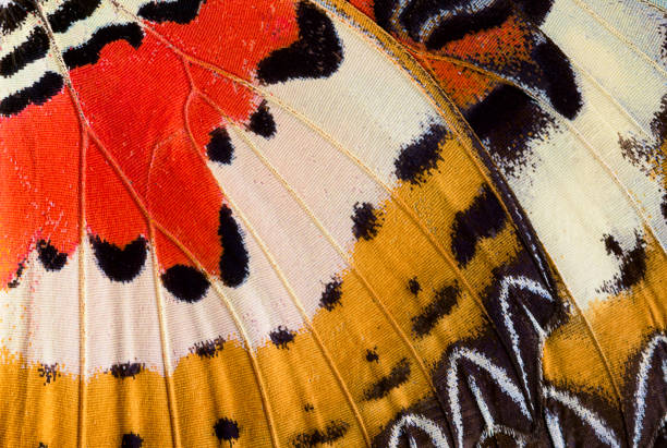 Abstract closeup of a butterfly wing stock photo