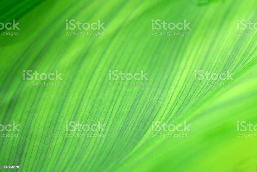Abstract closeup of a leaf design royalty-free stock photo