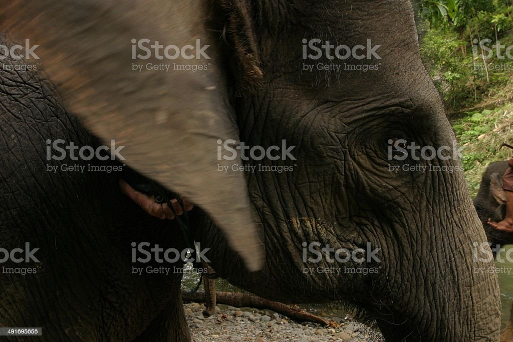 Abstrakte Nahaufnahme von asiatischer Elefant und Elefantenführer Fuß – Foto