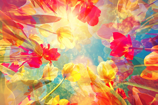 Dreamy and gentle artistic background with colorful tulips merging in a pastel colored flower composition, with soft and gentle hues. Beauty in nature: springtime and summer bring joy and happiness. Low angle subject view, looking up with close-up to the stems and flower heads.
