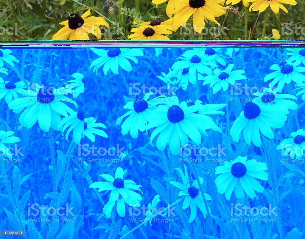 Abstract colored wildflower edited with blue, on top yellow royalty-free stock photo