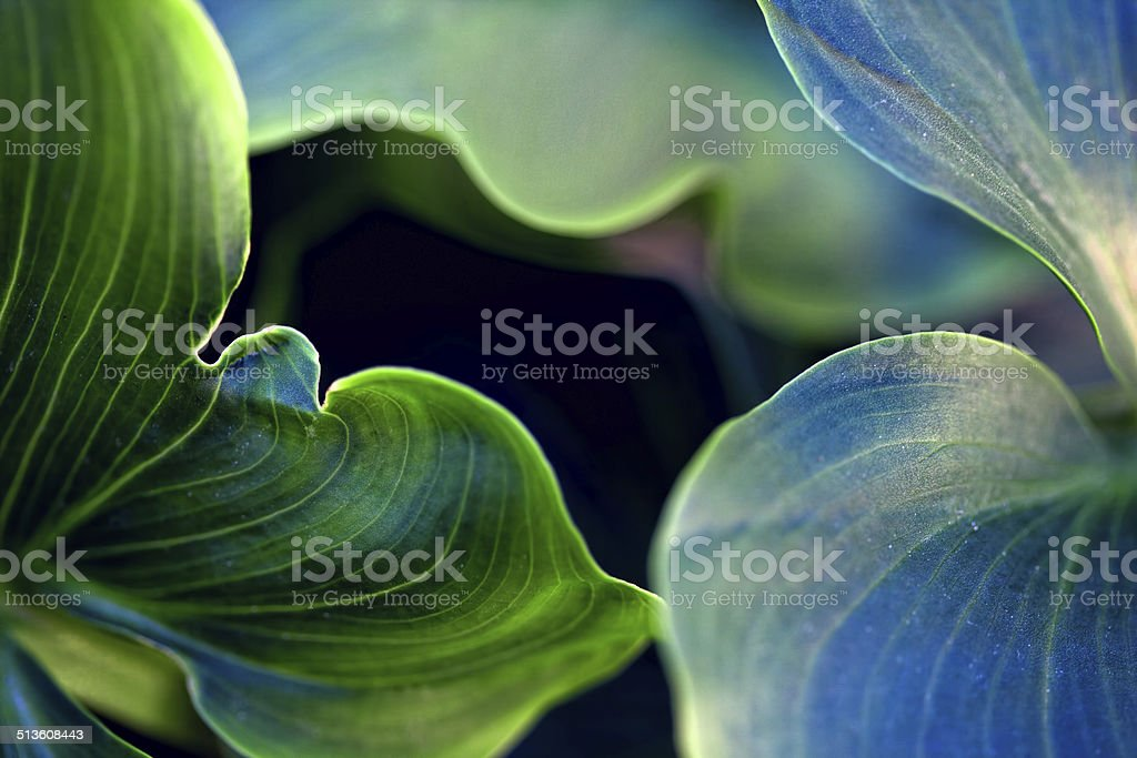 Abstract composition with ficus leaves stock photo