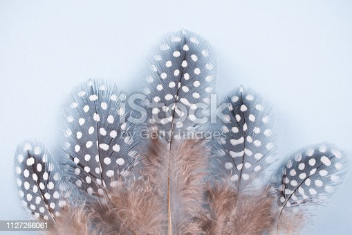 istock Abstract composition with spotted guinea hen feather with space for text, for desig 1127266061