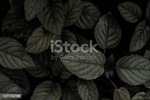 637513166 istock photo abstract dark monochrome leaf texture, nature background 1221742182