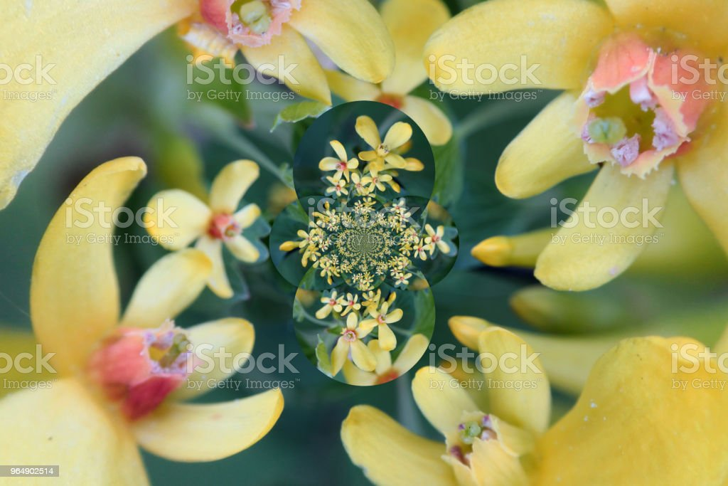 abstract decoration with flowers royalty-free stock photo