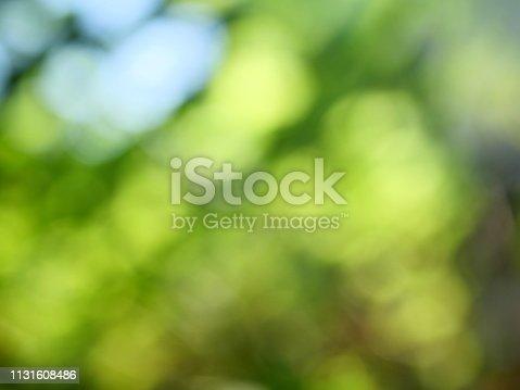 istock Abstract defocused green garden background 1131608486
