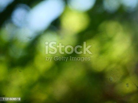 626588878 istock photo Abstract defocused green garden background 1131608519