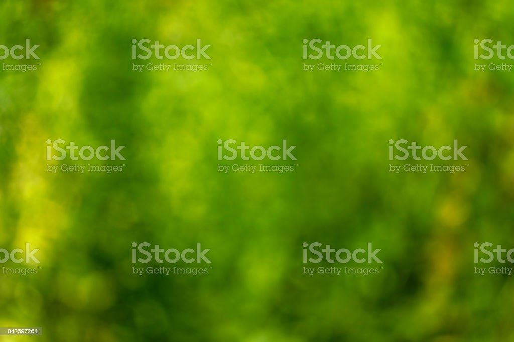 Abstract defocused green nature background stock photo