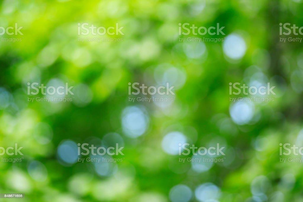 Abstrakte defokussierten grüner Natur Hintergrund – Foto