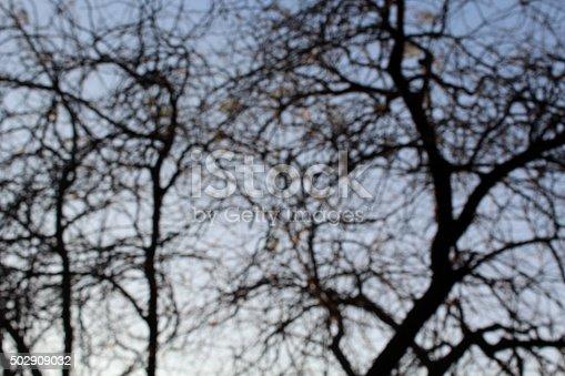 850558406 istock photo Abstract Defocused Leafless Trees 502909032