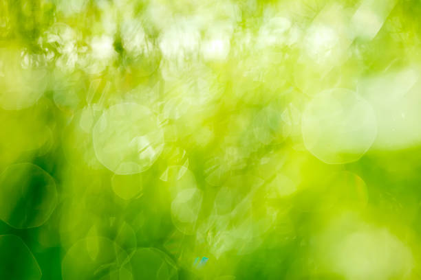 abstract defocused nature background - green background stock photos and pictures