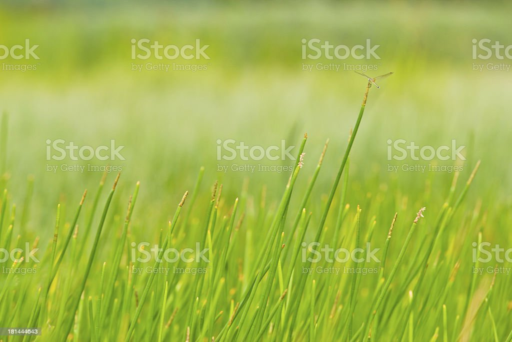 Abstract detail of  cane plant. royalty-free stock photo