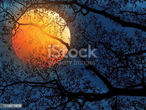 silhouette tree branches over dark blue dramatic sky and red moon for Halloween background.