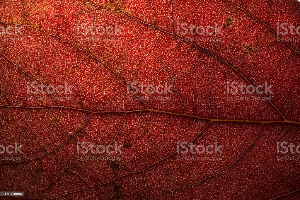 Abstract Dried Leaf royalty-free stock photo