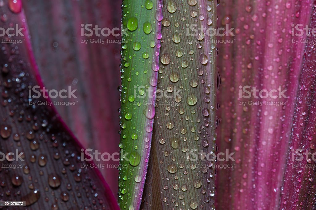 Abstract drops of water on flower leaf stock photo
