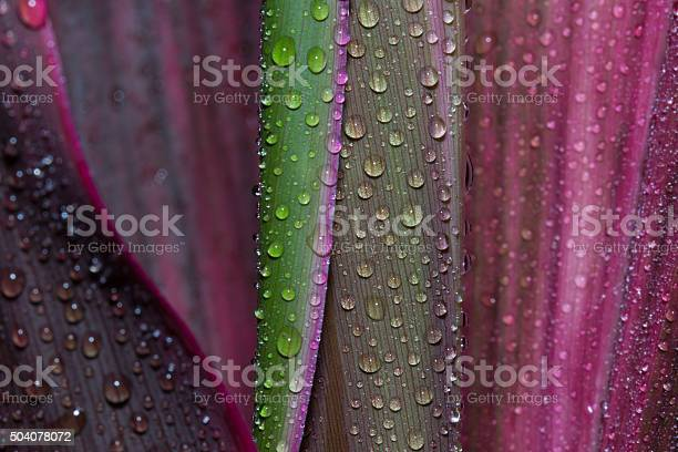 Photo of Abstract drops of water on flower leaf