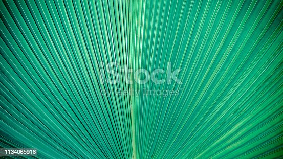 istock Abstract elegance green stripes from nature, tropical palm leaf texture background, vintage tone. 1134065916