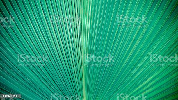 Abstract elegance green stripes from nature tropical palm leaf picture id1134065916?b=1&k=6&m=1134065916&s=612x612&h=avdlyrtax j17sofovawrxpi disk8fv ogtvpzxhxg=