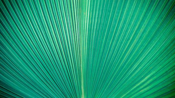 抽象優雅的綠色條紋從自然, 熱帶棕櫚葉紋理背景, 復古色調。 - 熱帶式樣 個照片及圖片檔