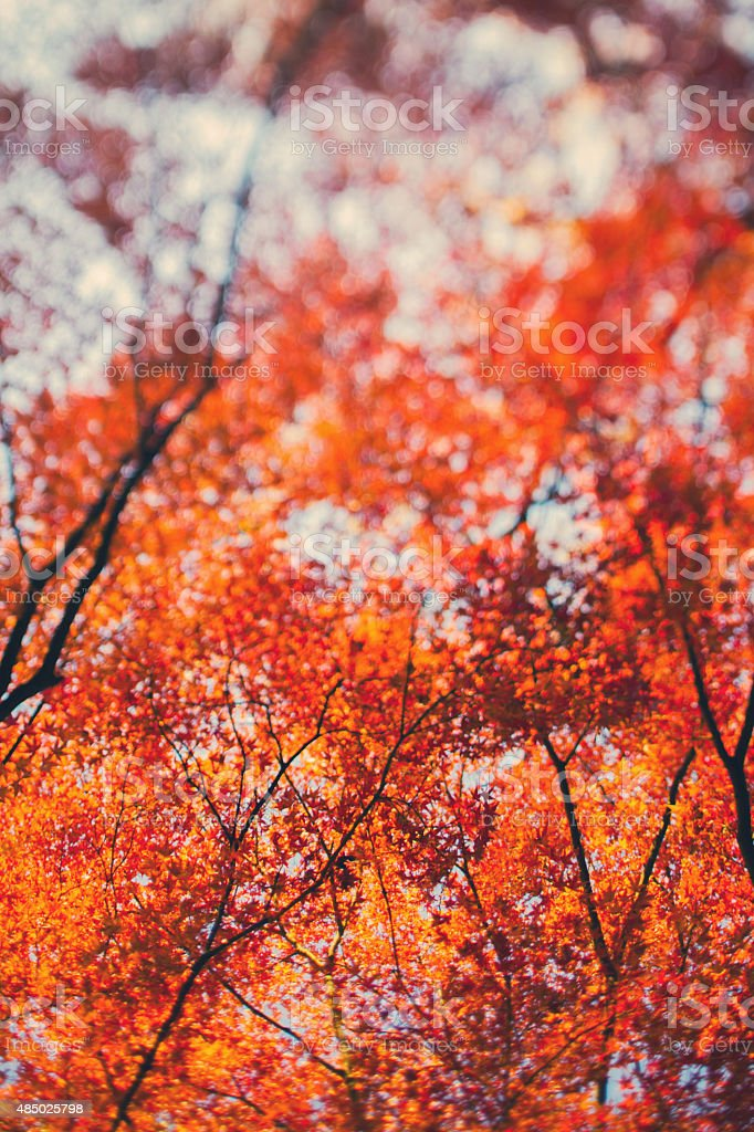 Abstract Fall Trees Background stock photo