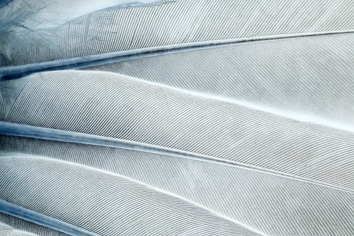 Abstract feathers background - negative image