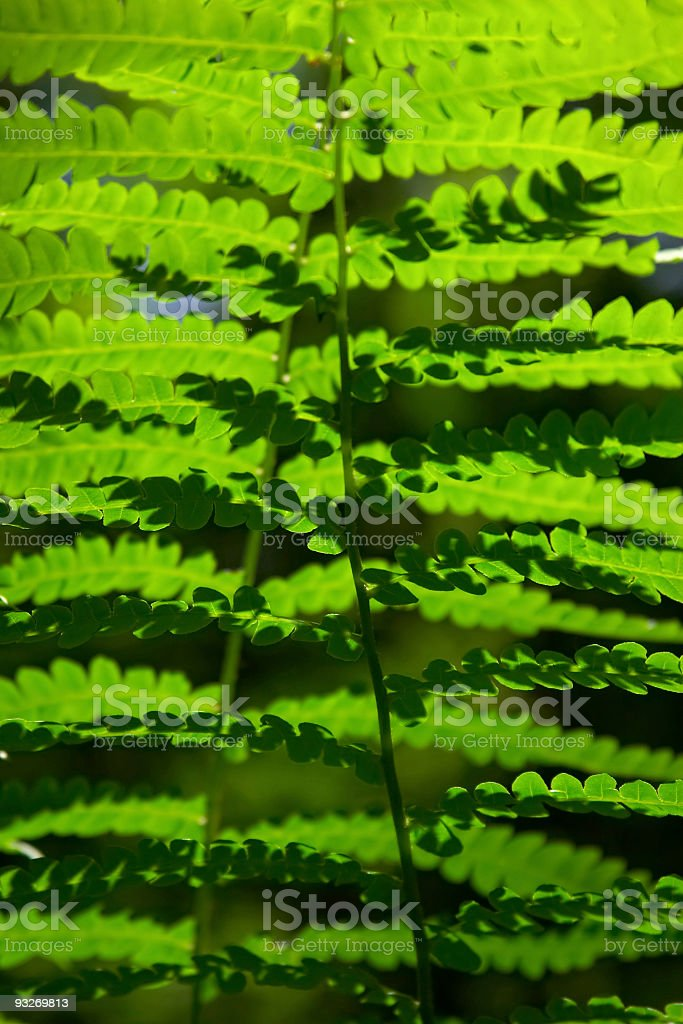 Abstract Ferns royalty-free stock photo