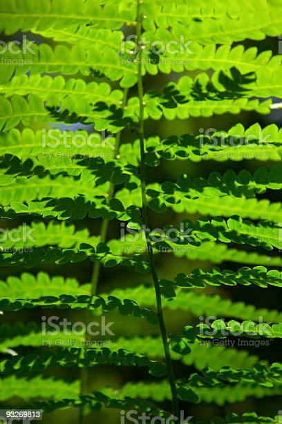Photo of Abstract Ferns