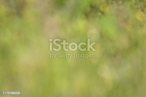 Abstract defocused field of pale pink flowers and sage green for spring summer background