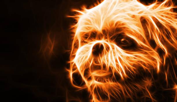 abstrakte feuer hund auf schwarzem hintergrund - große waffen stock-fotos und bilder