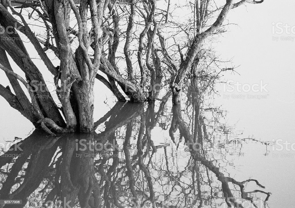 Abstract Flooded Tree royalty-free stock photo