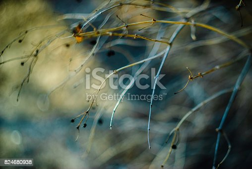 istock Abstract floral background. 824680938