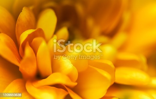 Retro art, vintage card and botanical concept - Abstract floral background, yellow chrysanthemum flower. Macro flowers backdrop for holiday brand design