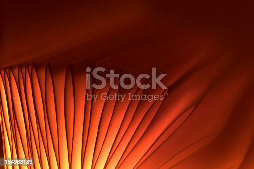 istock Abstract Florettes 184963189