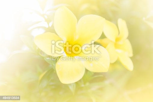 istock abstract flower background. made with color filters in soft colo 494913534